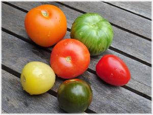 Erfolg kann vielfältig sein - Beispiel: Tomaten